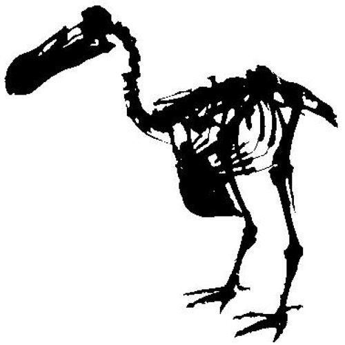 doDOH's avatar
