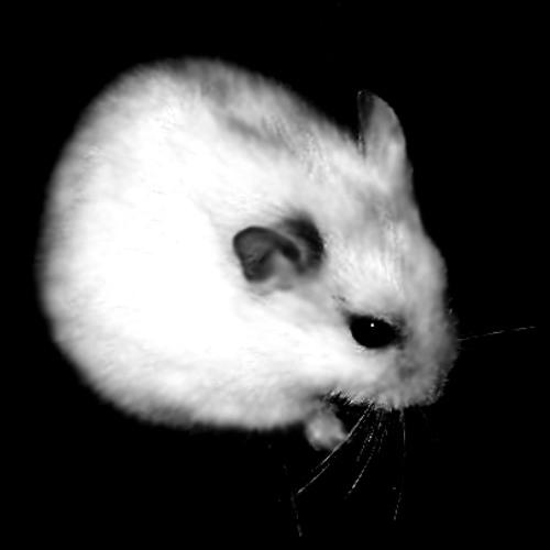 Hamster's avatar