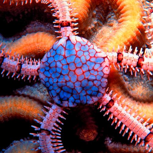 brittle star's avatar