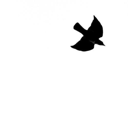 Willow Tree's avatar