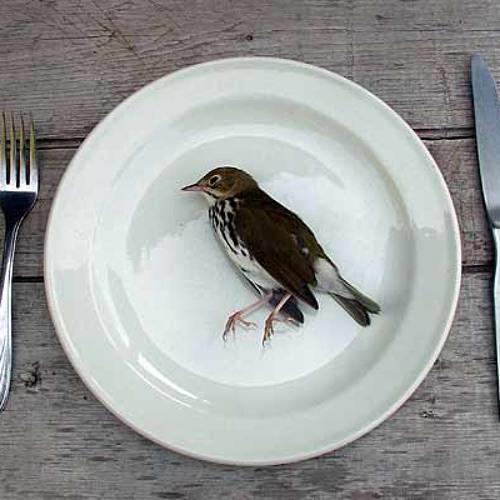 Dead Bird's avatar