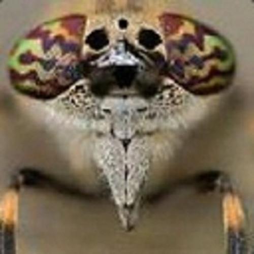 Bat (Nightfullon project)'s avatar