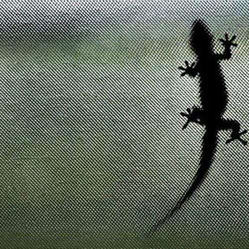gekko's avatar