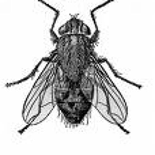 Housefly88's avatar