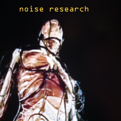 Noise Research's avatar