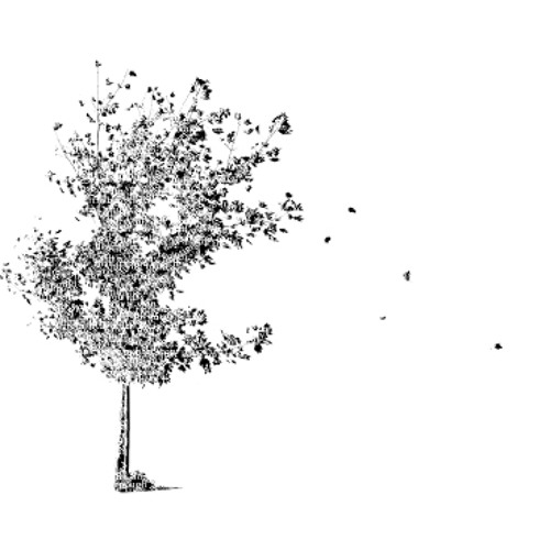Birdhill Co-Op's avatar