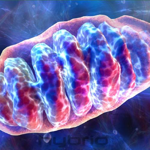 mitochondria's avatar