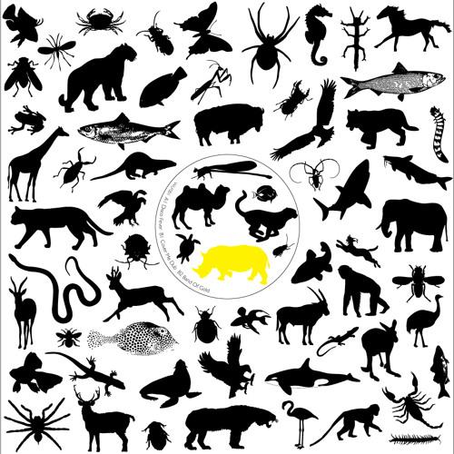 Wildlife Records's avatar