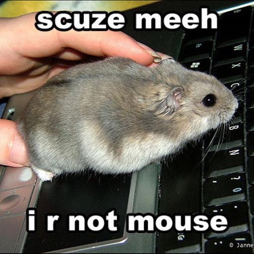 MouseJockey's avatar