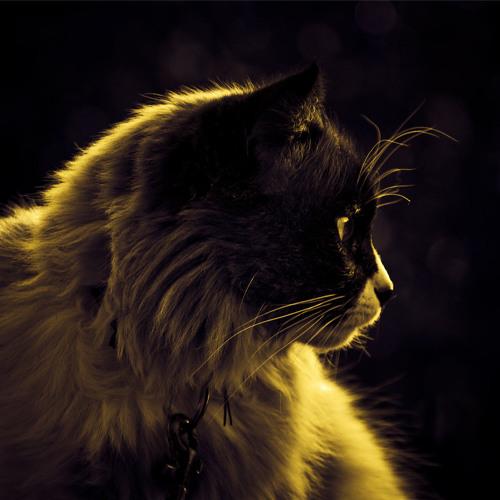 Gacougnol's avatar