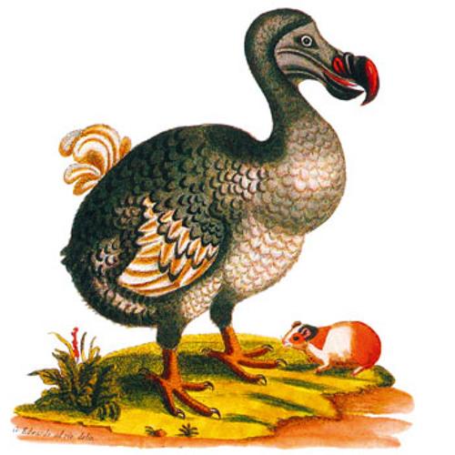 birdy1020's avatar