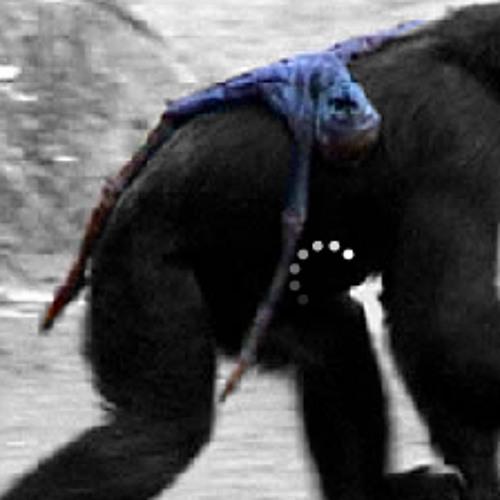 Ape Corporation est. 1998's avatar