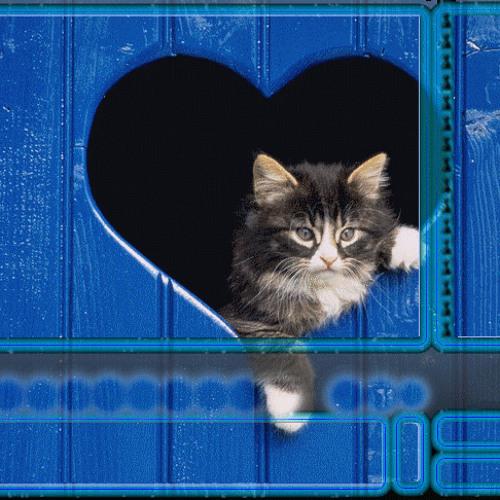 sohbetci's avatar
