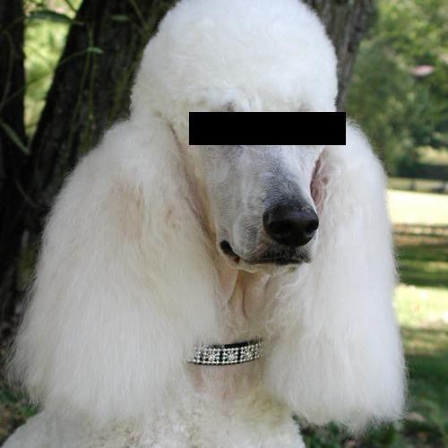 antipoodle's avatar