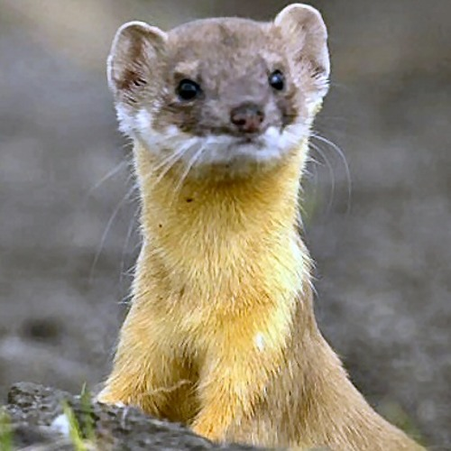 Feasible_Weasel's avatar