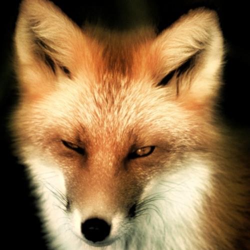 RedFoxy's avatar