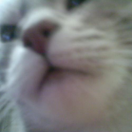 fuvi's avatar