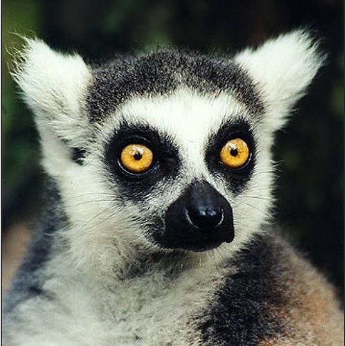 Lemurat's avatar