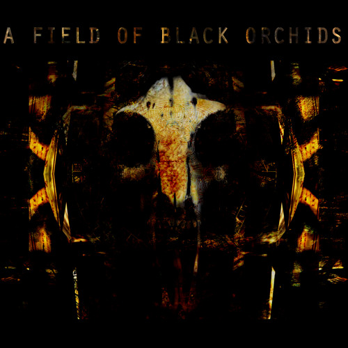 A FIELD OF BLACK ORCHIDS's avatar