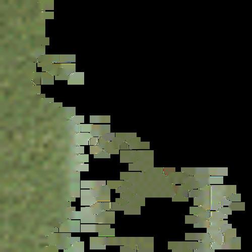 koalatea's avatar