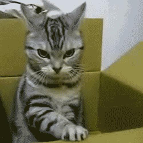 Smoky Cat's avatar
