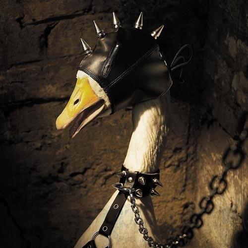 Foie Gras's avatar