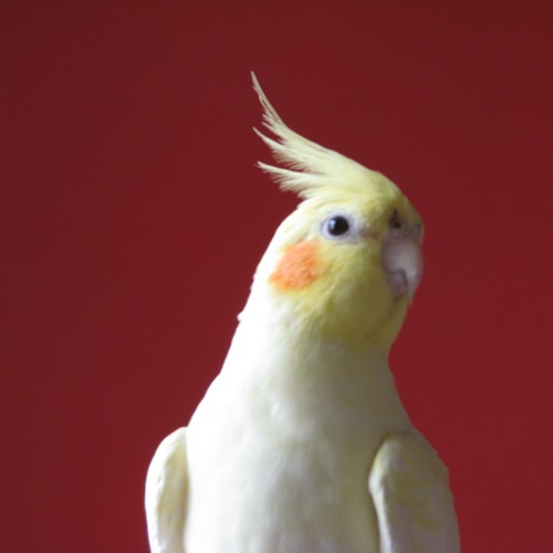 faabio's avatar