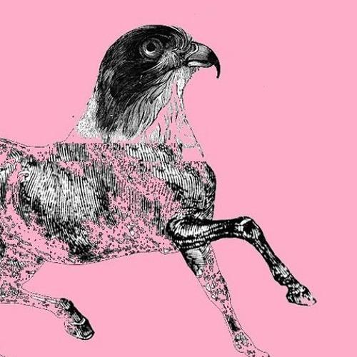 hawk horses's avatar