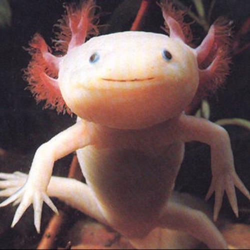 Ikey Heyman's avatar