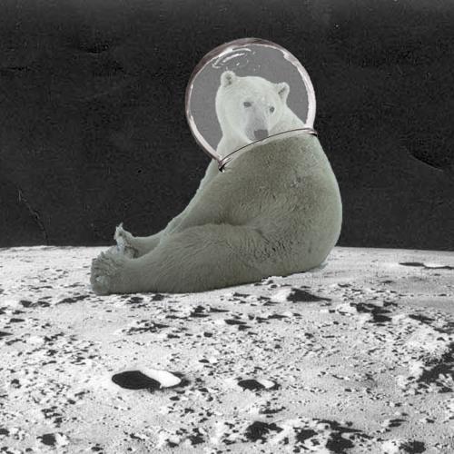 Astronaut Polar Bears's avatar