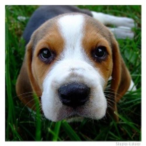 BeagleSound's avatar