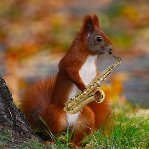 Jammin Squirrel's avatar