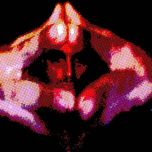 DIEGO VIPER's avatar