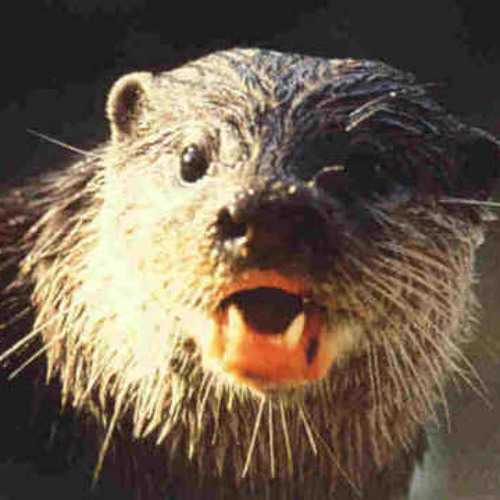 Otter Mayhem's avatar