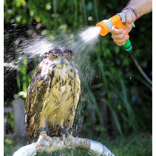 Superb owl's avatar