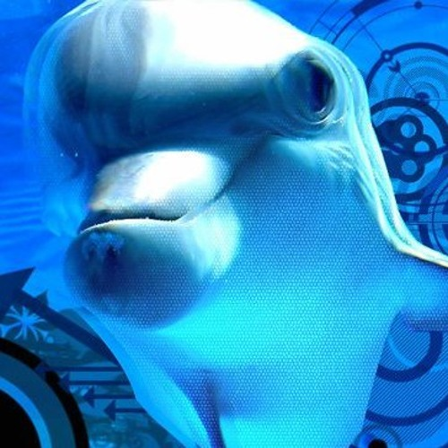 Project Code Acid Dolphin's avatar