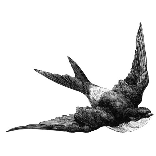 Francesrosey's avatar