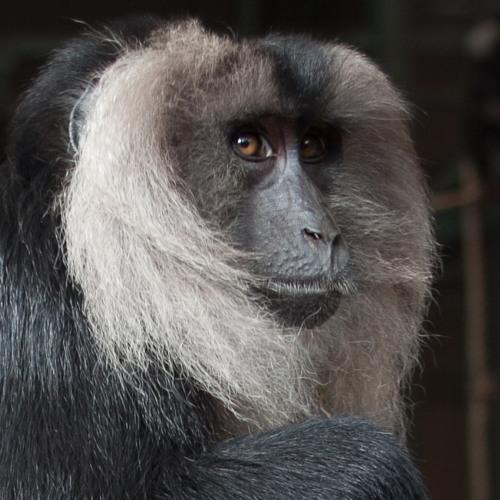 Ayup's avatar