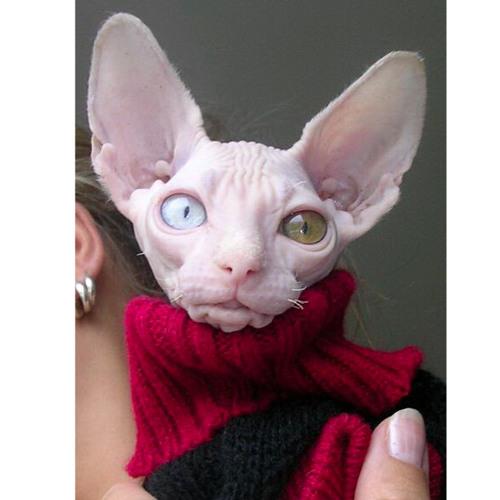 BigaMyst's avatar