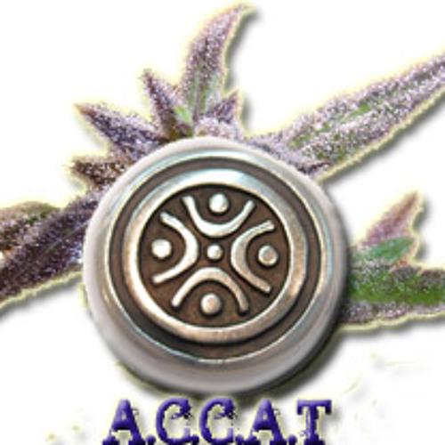 accat's avatar