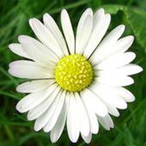 Big Daisy's avatar
