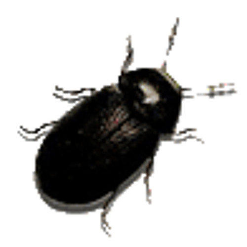 Diffie_Hellman's avatar
