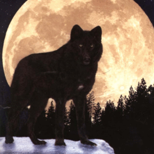 - Remus -'s avatar