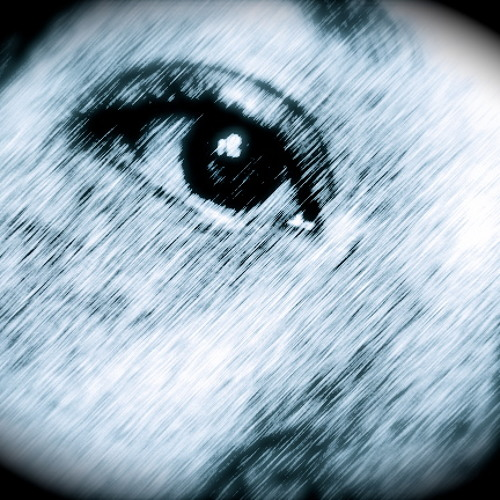 Bella1031's avatar