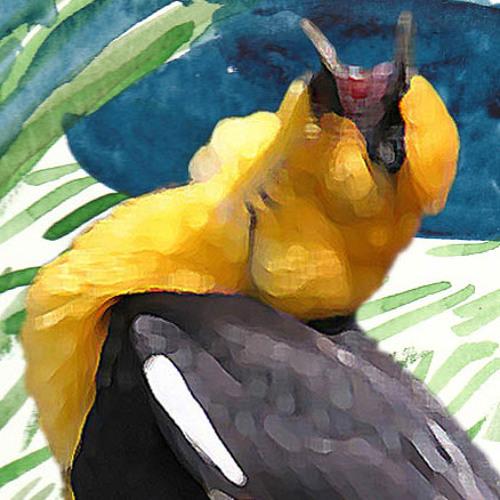 Xanthocephalus's avatar