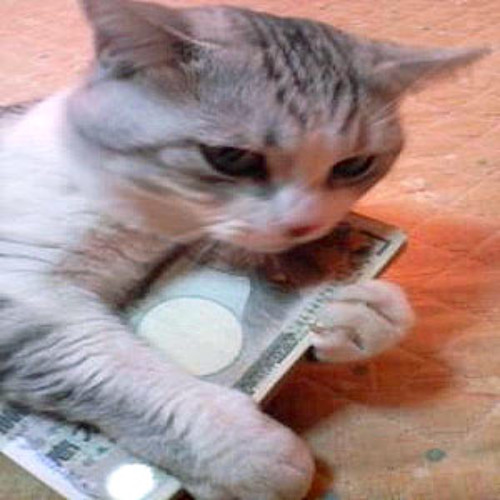 Cat Food Money Records's avatar