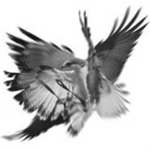 sixwing's avatar