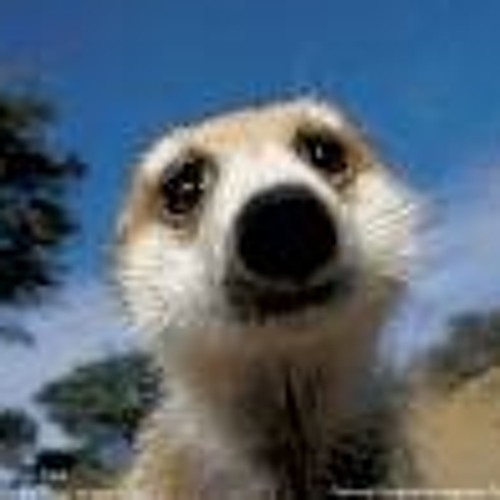 You´ll always know Meerkat....