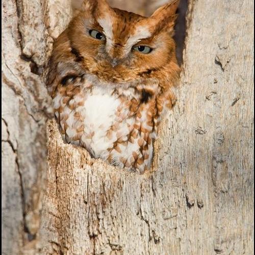 OwlDreams's avatar