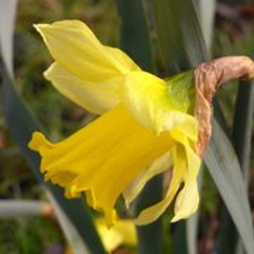 floradorla's avatar